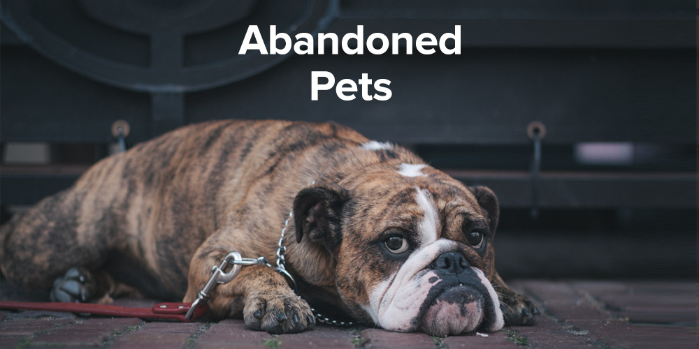 Abandoned Pet